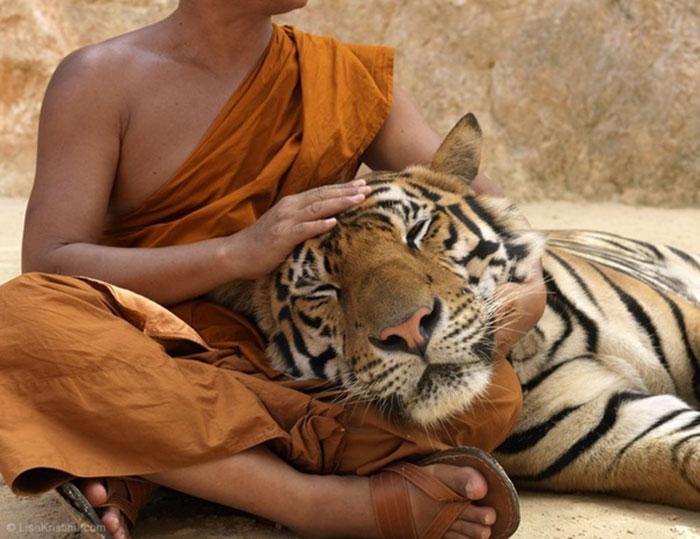 Монах-и-тигр