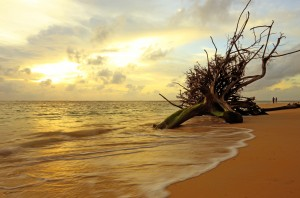 sunset dead tree in the sea at naiyang beach phuket thailand